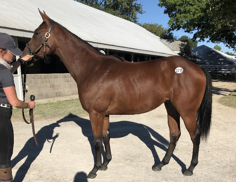 Blue Streak Racing makes purchase at Keeneland yearling sale!