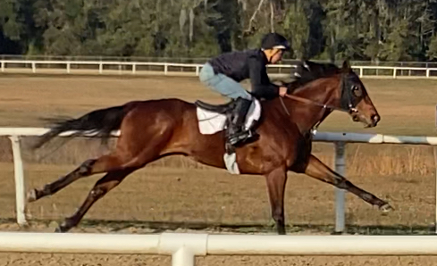 Run Happy filly joins the Charles Town string!