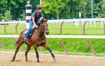 Barn Update, Saratoga Wrap-up, Looking Forward to Fall