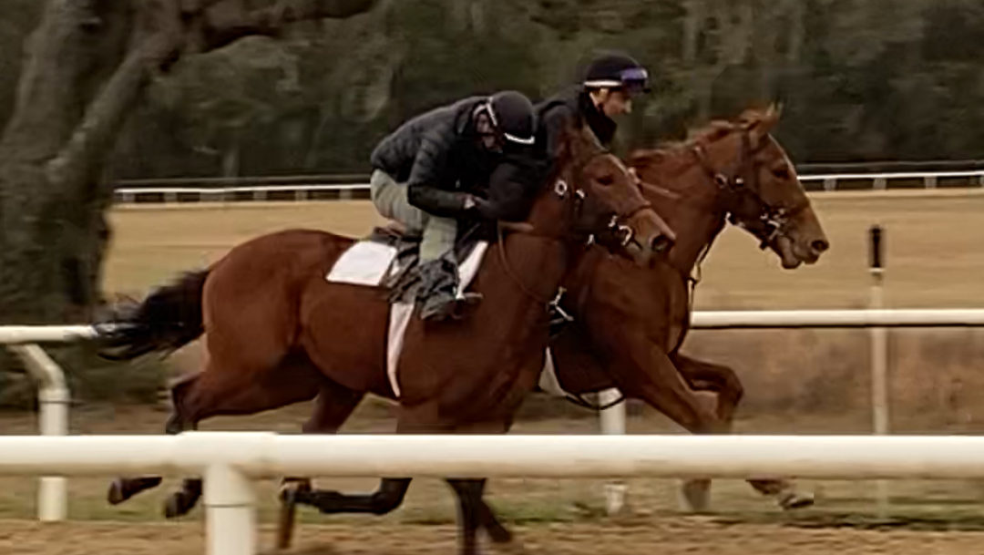 Exciting updates on our 2-year old Point of Entry Filly!