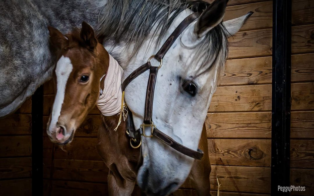 Viserion gives birth to second foal!