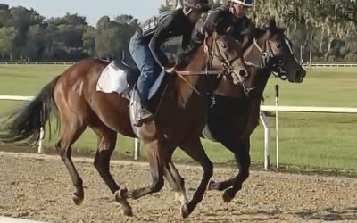 New yearling purchase progressing nicely in Ocala.