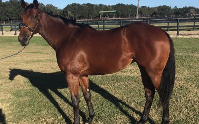 Only a few shares left in our 2020 yearling partnership!